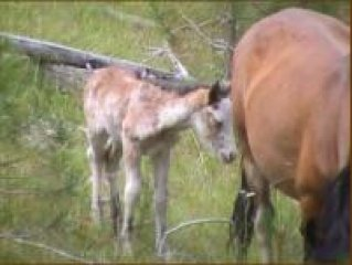 Spotted Filly