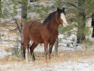big-summit-wild-mustang-herd20010a