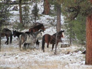 big-summit-wild-mustang-herd20012