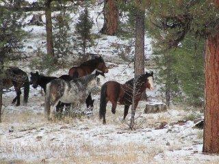 big-summit-wild-mustang-herd20012