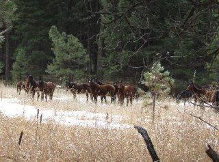 big-summit-wild-mustang-herd20016