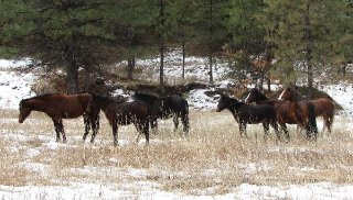 big-summit-wild-mustang-herd20023